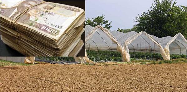 farming-schemes-greenhouse-farming
